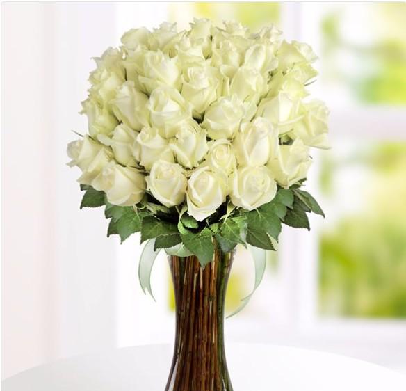 Rosas blancas 41