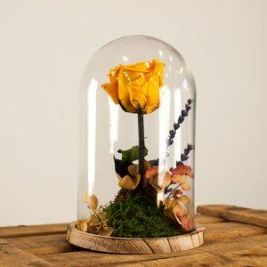 Rosa eterna amarilla en cúpula de cristal a domicilio en Toledo.