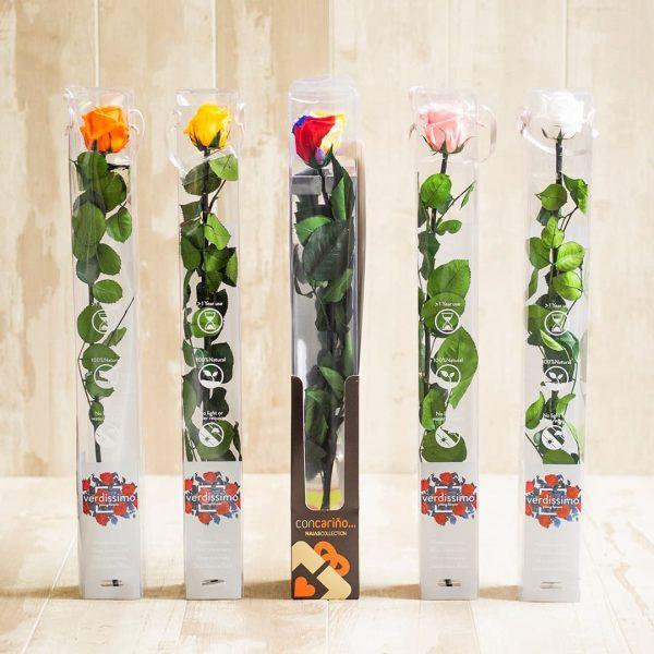 Rosas preservada de colores en caja para regalo a domicilio en Toledo.