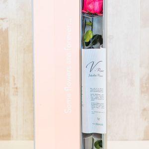 Rosa preservada con caja