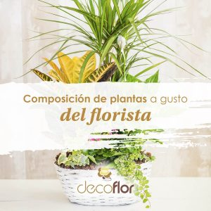 Composición de plantas a gusto del florista