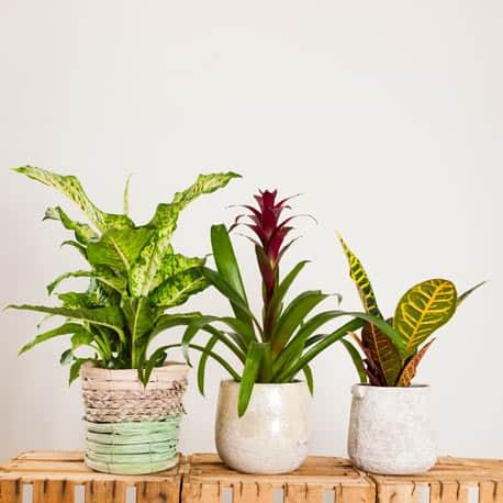 Trio de plantas exóticas