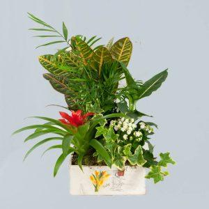 Caja de madera con plantas exóticas a domicilio en Toledo