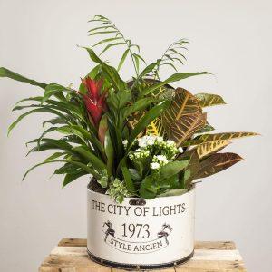 Enviar Bombonera de plantas exóticas a domicilio en Toledo