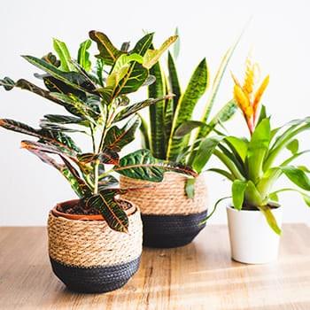 Plantas de interior a domicilio en Toledo.