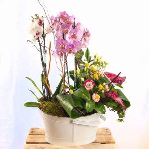 Composición de orquídeas para el día de la madre a domicilio en Toledo