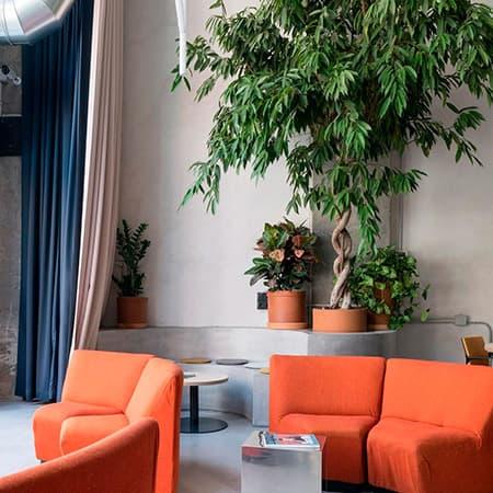 Decoración con plantas y flores para negocios, escaparates, hoteles y restaurantes en Toledo.